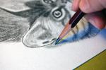 鉛筆画猫工程